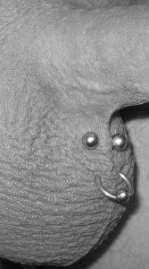 Penis intim piercing Genital piercing